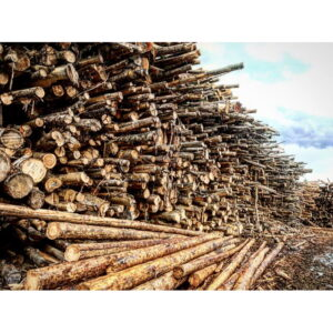 King County Firewood Yard 3